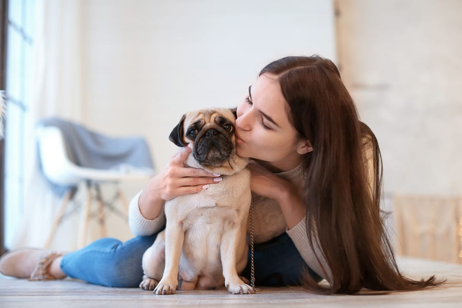 What Temperament Do Pugs Have?