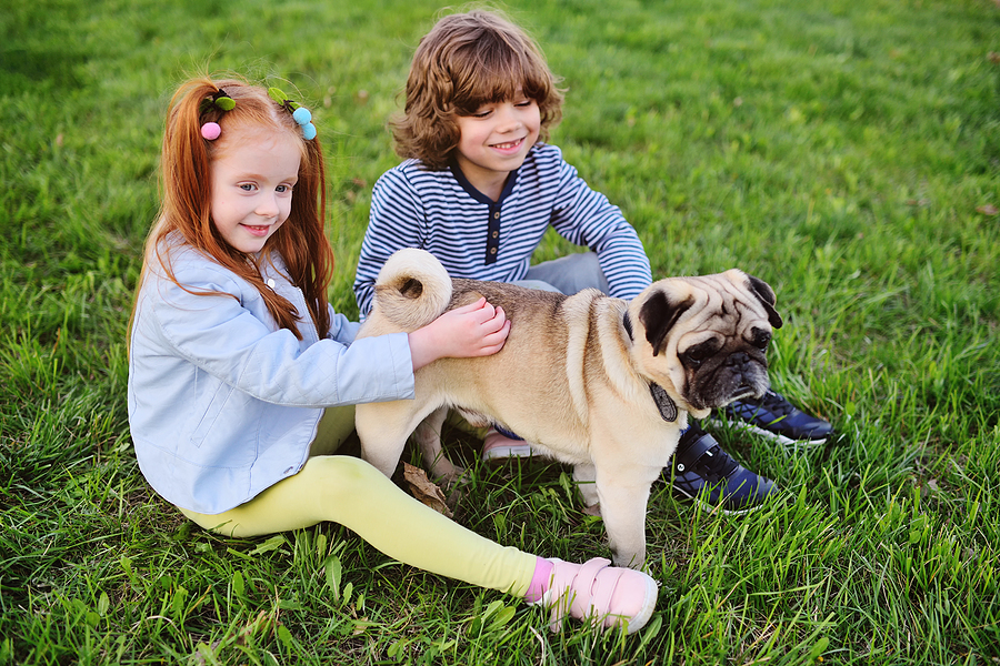 Are Pugs Good with Kids? Your Questions Answered